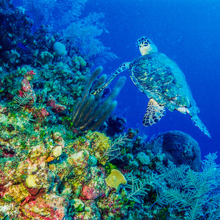 Turtle-print.jpg