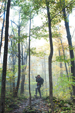 Greg photographing in forest.jpg