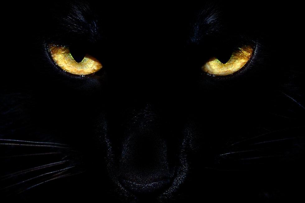 Cat_Eyes_Frontpage.jpg