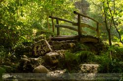 El puente del bosque.