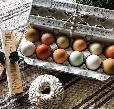Local Farm Fresh Eggs