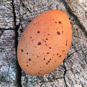 Super Speckled Welly Egg