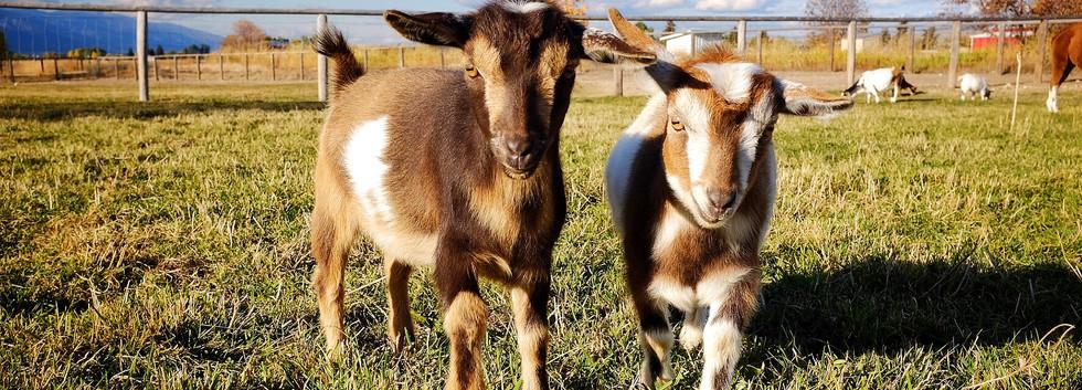 PAP Leucothea and PAP Salacia