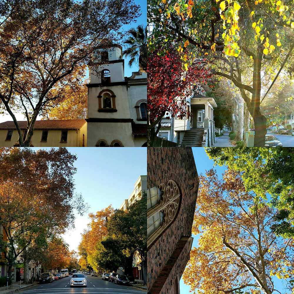November in Sacramento