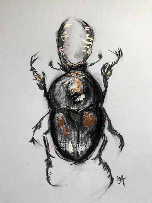Australian Stag Beetle
