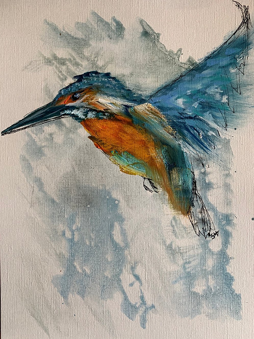 KINGFISHER STUDY II