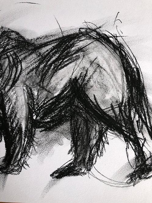 'THE BLACK BEAR'