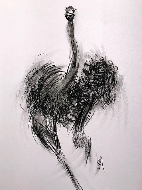 Charcoal Movement Study: OSTRICH II