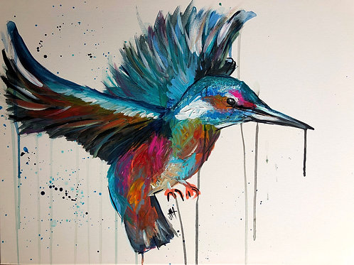 DAY 5: Colourful Kingfisher