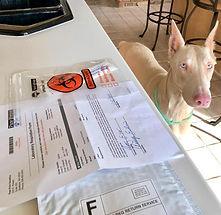 Aspen DNA Testing Day.jpg
