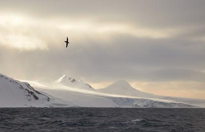 Flying high, Antarctica