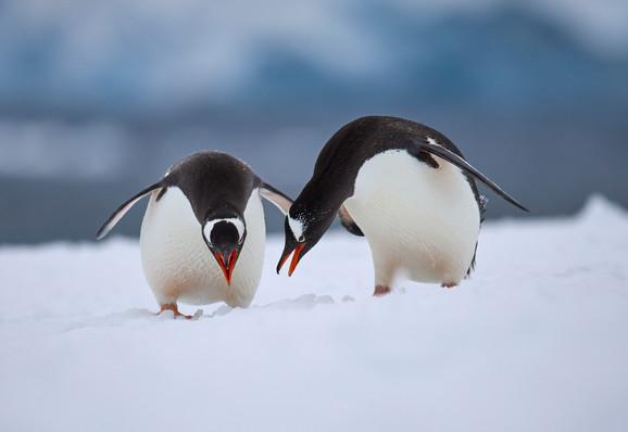 Let's dance, Antarctica