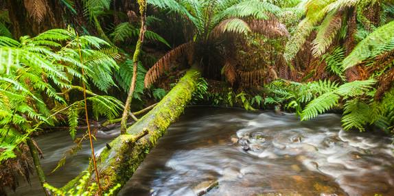 Rainforest Crossing, Mt Field