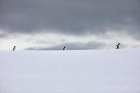 Penguin Trek, Antarctica
