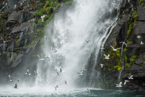 Alaska USA-1650.jpg