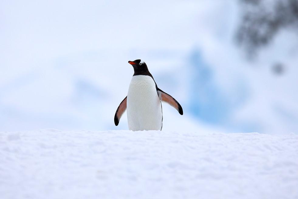 Penguin ridge, Antarctica
