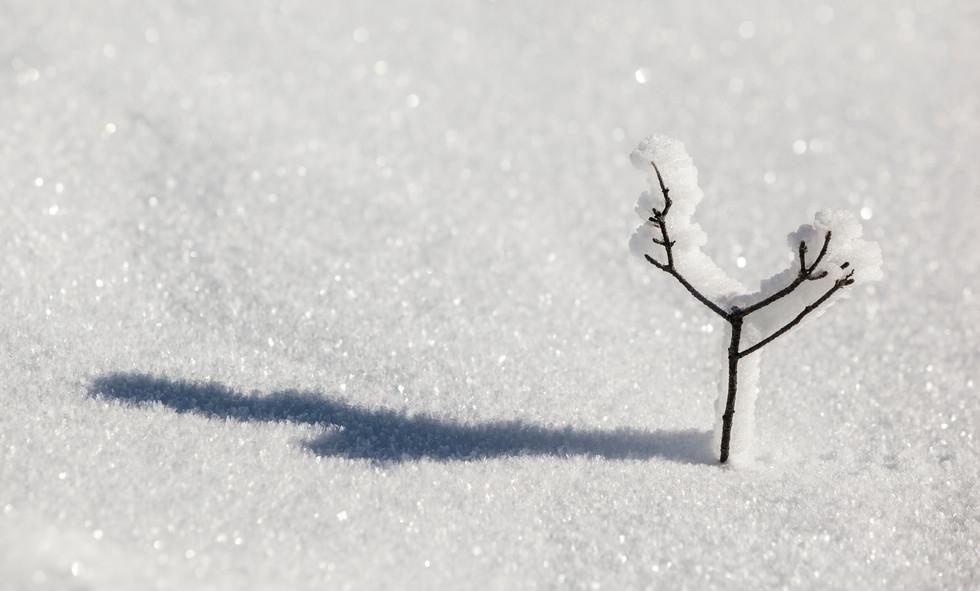The Tiny Crystal Tree, Ben Lomond