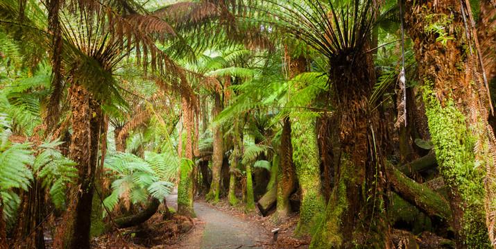 Mt Field Tasmania-7797.jpg