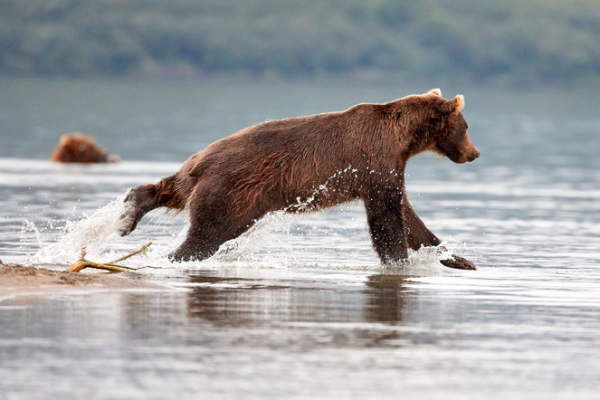 A leap of faith, Kurilskoye Lake Kamchatka