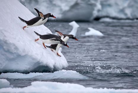 Diving partners, Antarctica