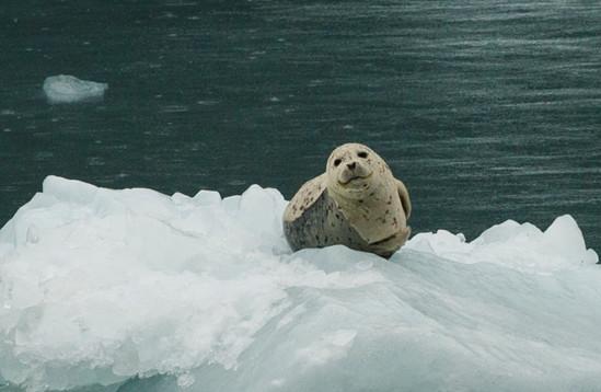 Alaska USA-1449.jpg