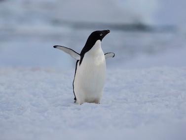 Strike a pose, Antarctica