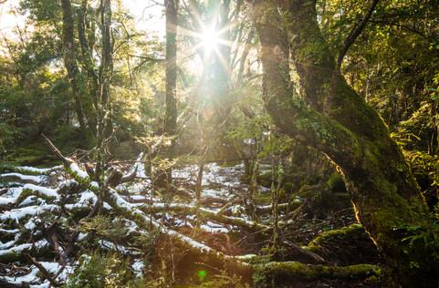 Frozen Rainforest, Cradle Mountain
