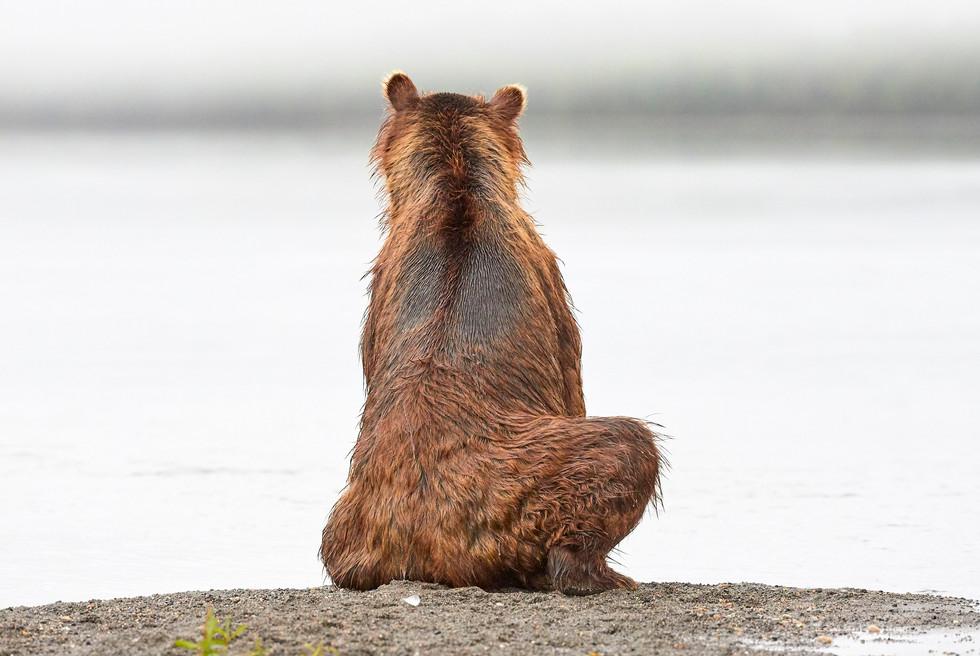 Watchful eyes, Kurilskoye Lake Kamchatka