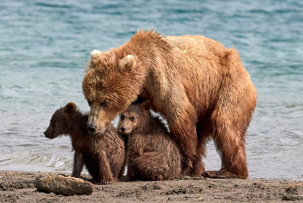 I'll protect you, Kurilskoye Lake Kamchatka