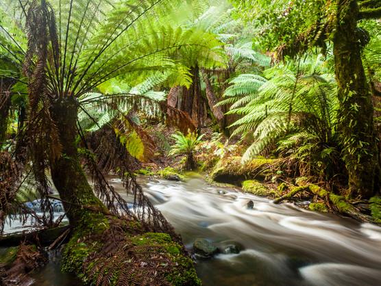 Mt Field Tasmania-7801.jpg