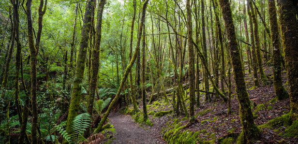 Mt Field Tasmania-7818.jpg