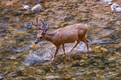 Zion National Park USA-0362.jpg