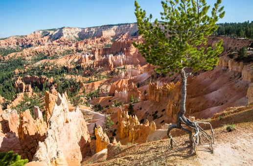 Bryce Canyon USA-0606.jpg