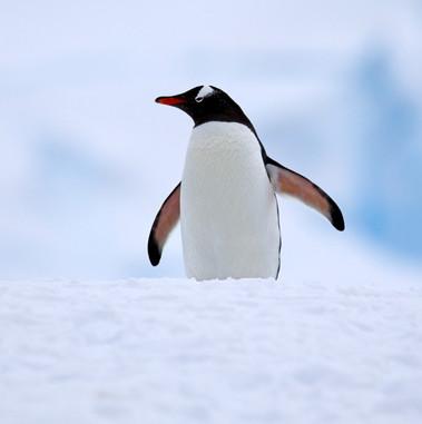 Stand proud, Antarctica