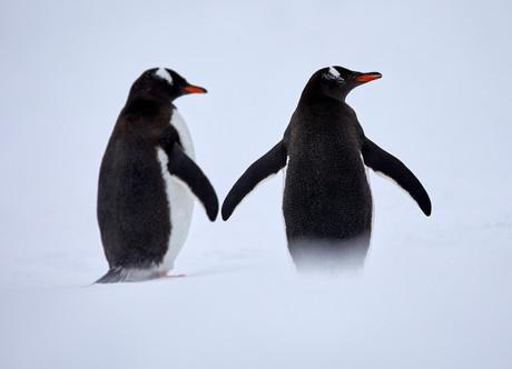 Perfect pair, Antarctica