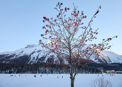 St Moritz, Switzerland_2206.jpg