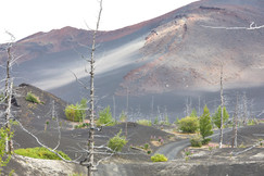 The dead forest, Tolbachik Volcano Kamchatka