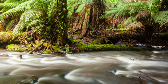 Mt Field Tasmania-7810.jpg