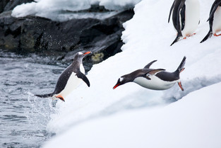 Coming and going, Antarctica