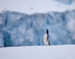 Call of the wild, Antarctica