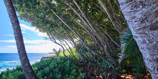 Hawaii_Oahu_DSF9985.jpg