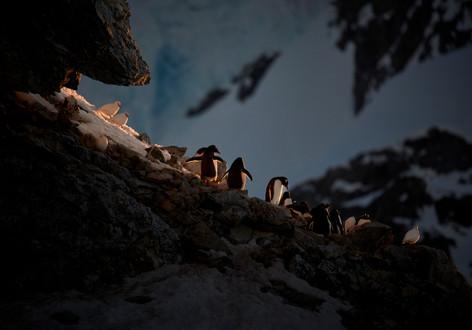 Secret Roost, Antarctica
