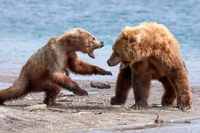 Leave me alone, Kurilskoye Lake Kamchatka