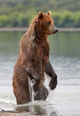 Standing tall, Kurilskoye Lake Kamchatka
