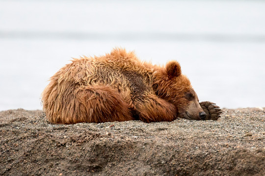 Peaceful sleep, Kurilskoye Lake Kamchatka