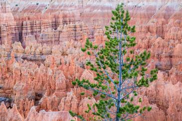 Bryce Canyon USA-0846.jpg