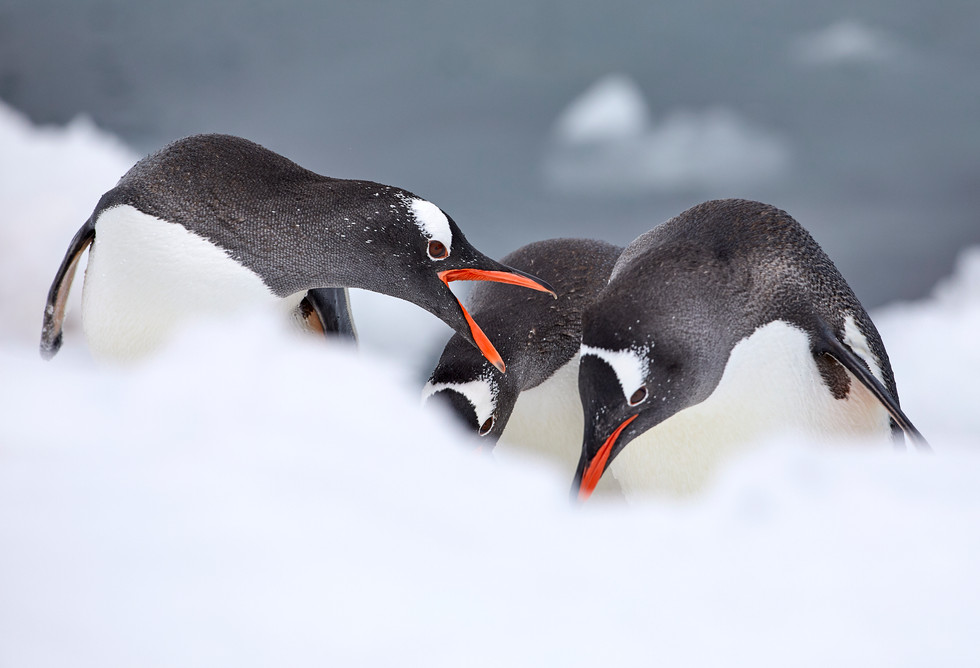 Three's a crowd, Antarctica