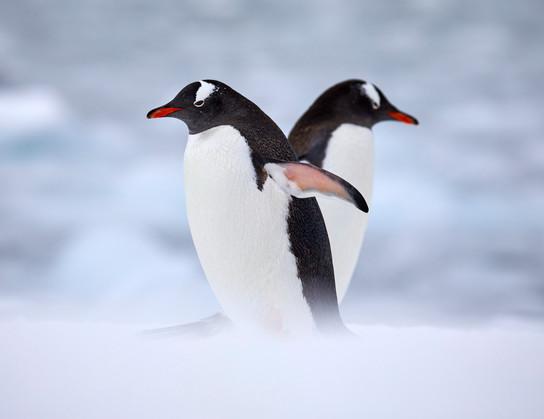 Love heart, Antarctica
