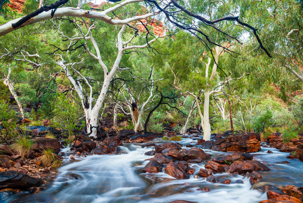 Flooded Creekbed, Kings Canyon