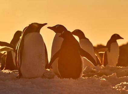 Sunset crew, Antarctica
